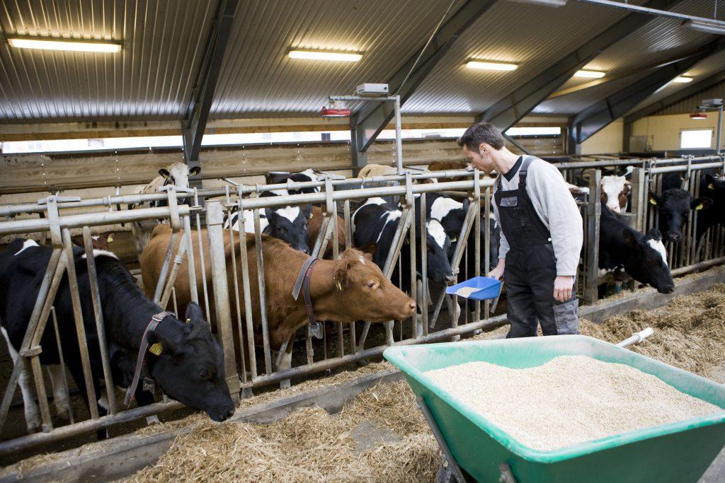STORT VIKARBEHOV: Avløsning ved ferie, fritid og sykdom er en velferdsordning som blir svært mye benyttet av norske gårdbrukere, viser tall fra Norske Landbrukstenester. (Foto: Colourbox)
